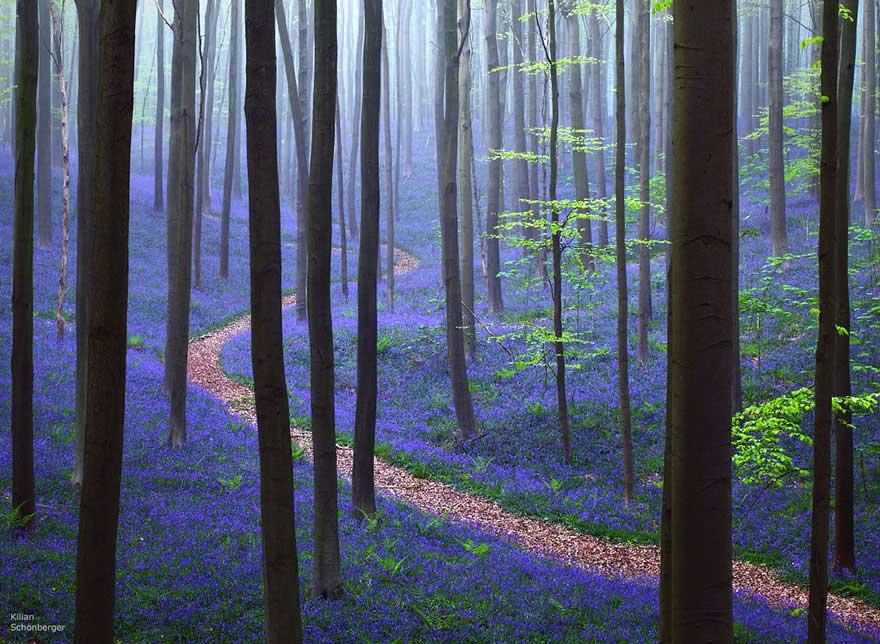 Hallerbos, un bosque de hadas