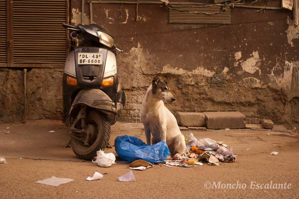Llegada a Nueva Delhi